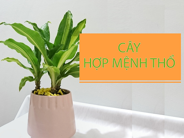 cay-hop-menh-tho