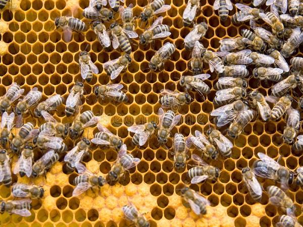Mơ thấy ong điềm báo gì và mang đến con số đề nào ăn chắc