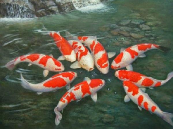 Mơ thấy cá điềm báo gì và đánh con số nào dễ trúng