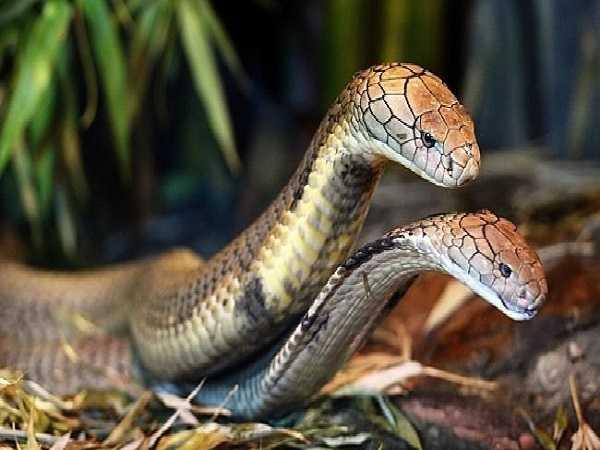 Mơ thấy 2 con rắn điềm dữ hay lành, con số liên quan là số mấy?