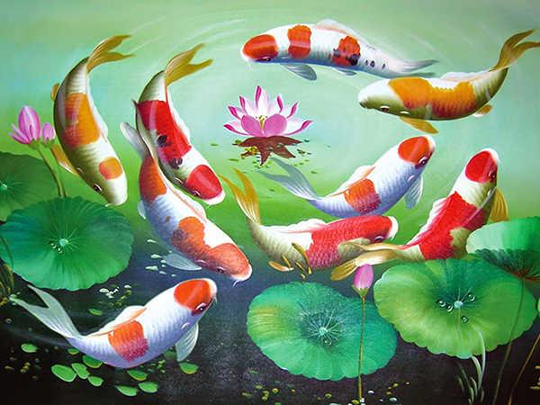 Mơ thấy cá chép báo hiệu điều gì, đánh con số nào chắc ăn?