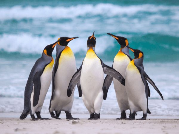 Mơ thấy chim cánh cụt là điềm gì, ghi con lô nào dễ trúng?