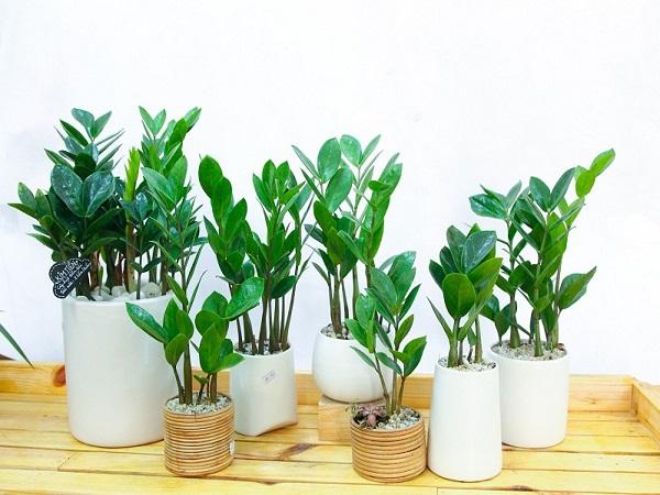 Tuổi Bính Tý hợp cây gì giúp hút tài lộc?