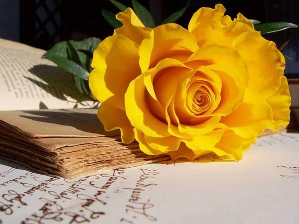 Mơ thấy hoa màu vàng điềm báo lành hay dữ?
