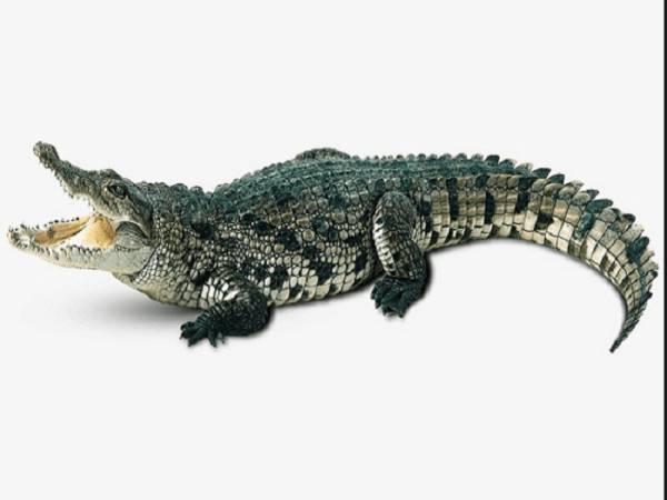 Ngủ mơ thấy cá sấu là điềm hên hay xui ? Đánh số đề con gì ?