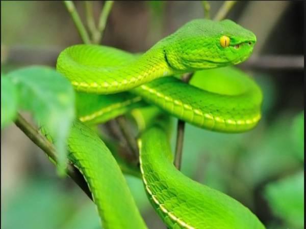 Chiêm bao mơ thấy rắn xanh đánh số mấy ? Là điềm báo gì ?